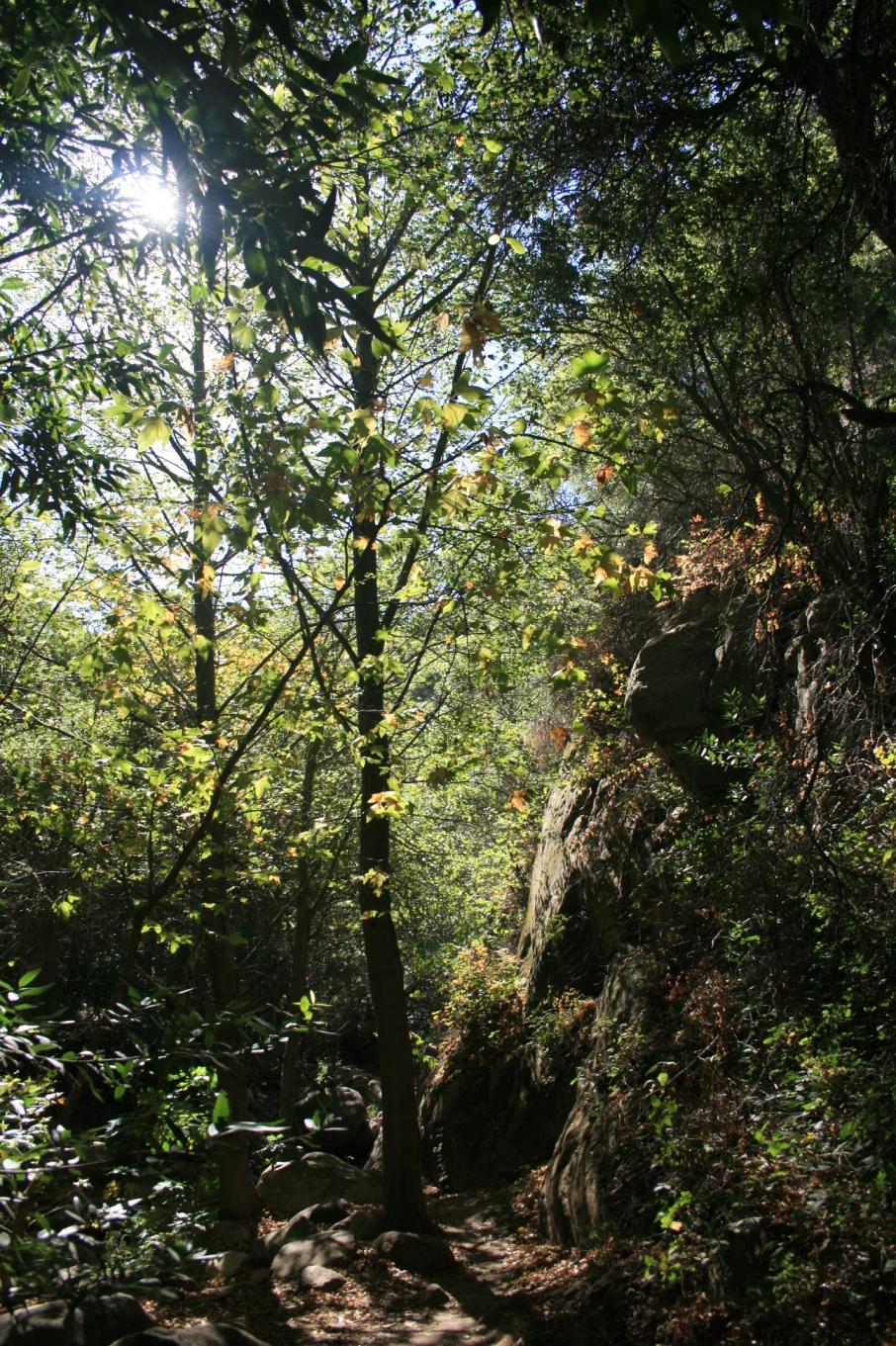 Greenery in lower Rattlesnake Canyon