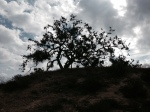 1:23 - Oak tree at the top of the saddle (bear right on the single-track)