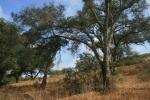 1:17 - Oaks on the East Loma Trail