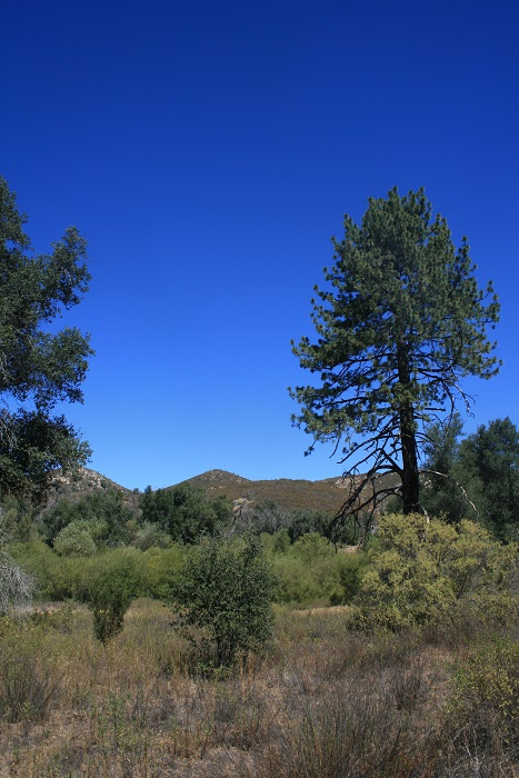 Pines and oaks on the Sweetwater River Trail