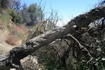 0:22 - Low bridge: fallen tree on the trail