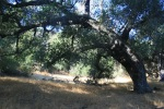 0:17 - Oak in Rice Canyon
