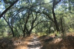 1:10 - Oaks near the start of the Willis Canyon Trail