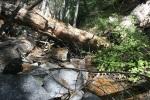 Crossing Mountain Home Creek, San Bernardino National Forest