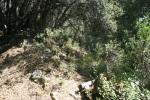 Following a tributary canyon of Glen Martin Creek, San Bernardino National Forest