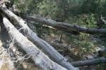 Fallen logs in the San Bernardino National Forest
