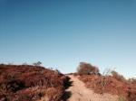 Dirt road on Saddle Peak, Santa Monica Mountains, Malibu, CA