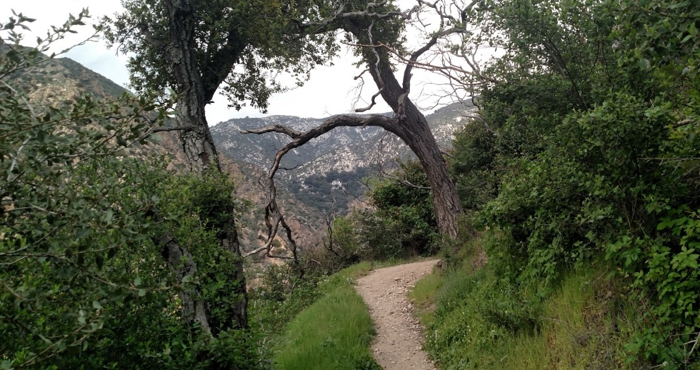 Sunset Ridge Trail, Altadena, CA