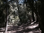 Devore Trail Camp