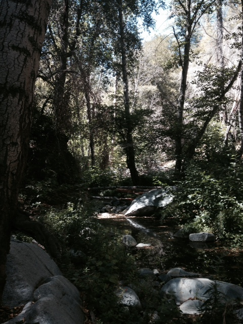 Stream crossing in the Angeles National Forest