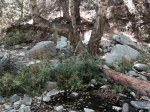 Stream crossing in the Angeles National Forest before Devore Trail Camp