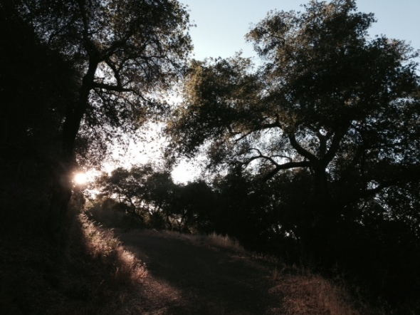 Dusk on the Arroyo Burro fire road, Los Padres National Forest, Santa Barbara