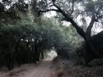 Oak woodland on Arroyo Burro Road, Los Padres National Forest, Santa Barbara