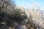 Bear Divide Trail leading through chaparral, Angeles National Forest
