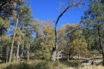 Black oaks and pines on the Big Laguna Trail, Laguna Mountains, San Diego County