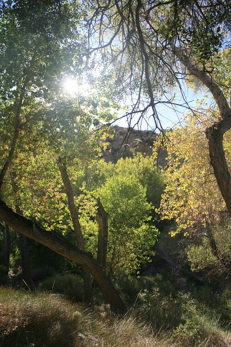 Cottowoods at Horsethief Creek, Santa Rosa Mountains