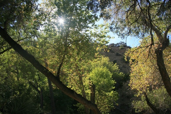 Trees at Horsethief Creek, Santa Rosa Wilderness