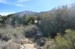 Cactus Springs Trail crosses Deep Creek, Santa Rosa Mountains