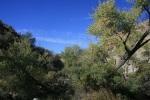 Cottonwoods in Horsethief Creek, Santa Rosa Mountains