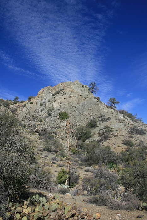 View on the Cactus Springs Trail, Santa Rosa Mountains