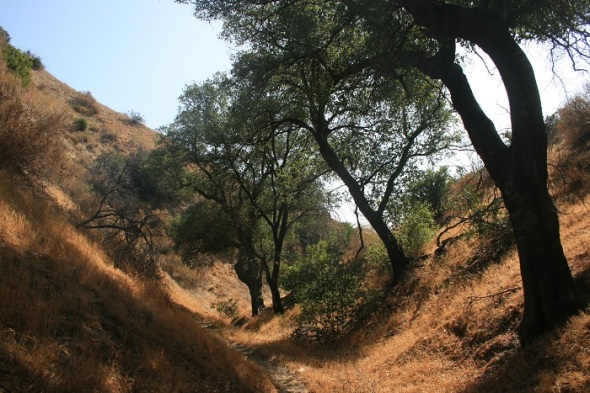 Oak woodlands, Michael Antonovich Regional Park