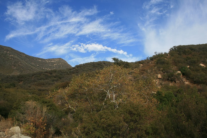 Panoramic view of the Los Padres National Forest from the Pratt Trail