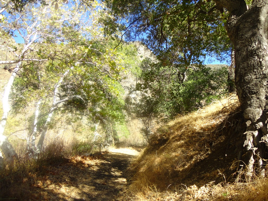 Oaks and sycamores in Pacoima Canyon on the way to Dagger Flat, Angeles National Forest