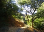 Oak trees and sunlight, Pacoima Canyon, Angeles National Forest, CA