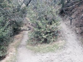 Trail descending to Millard Canyon in the Angeles National Forest, CA