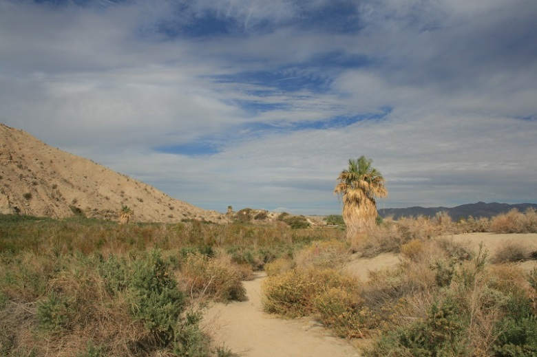 McCallum Nature Trail, Coachella Valley Preserve, Thousand Palms, CA