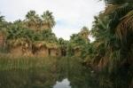 McCallum Pond, Coachella Valley Preserve, Thousand Palms, CA