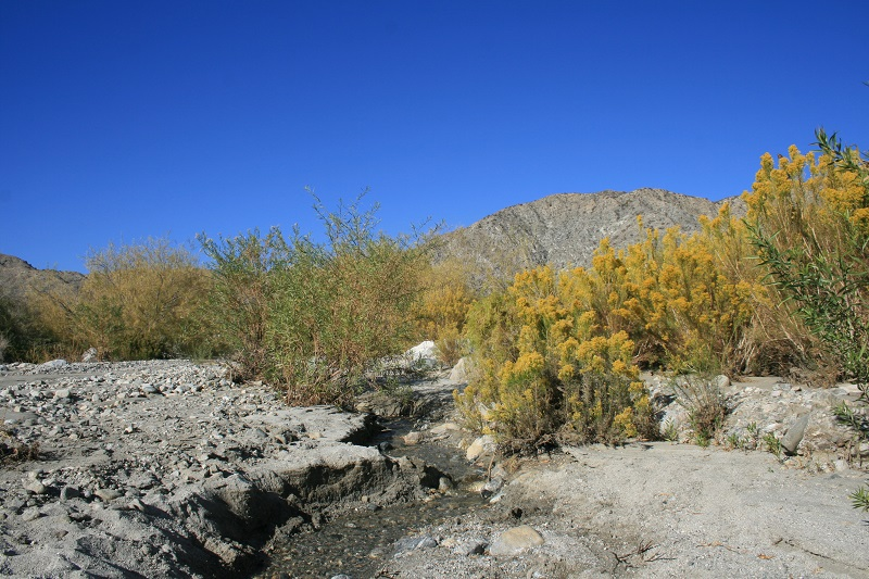 Mission Creek, San Bernardino Mountains, CA