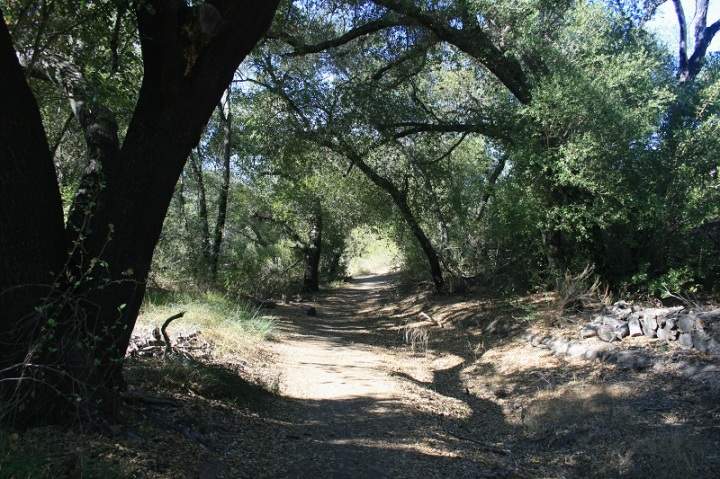 Oak trees in the Oak Oasis Open Space Preserve, Lakeside, CA