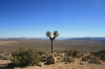 0:40 - Lone Joshua Tree at an overlook near the top