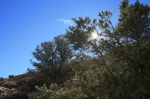 0:28 - Pinyon pines at the saddle, about 2/3 of the way up