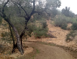 Sonome Canyon Loop, Chino Hills State Park