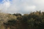 Steep ascent on the Pacific Crest Trail, Sierra Pelona, Angeles National Forest, CA