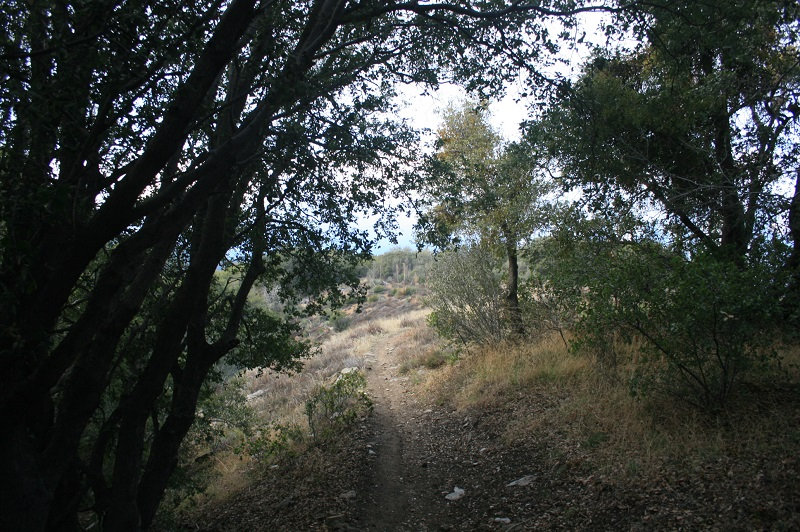 Woodlands on the Pacific Crest Trail, Sierra Pelona, Angeles National Forest, CA