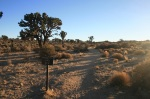 Covington Crest Trail Head, Joshua Tree National Park