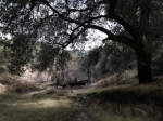 Single track trail in Elsmere Canyon Open Space, Santa Clarita, CA