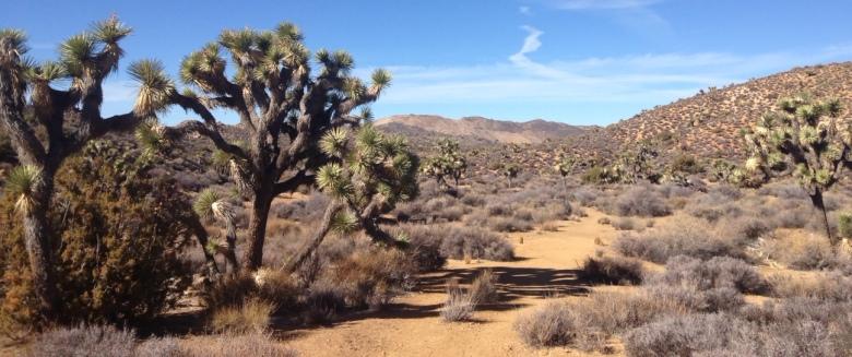 Desert landscape, Lost Horse Mine Trail, Joshua Tree National Park
