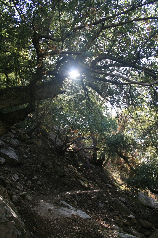 Sun through the trees on the Castle Canyon Trail