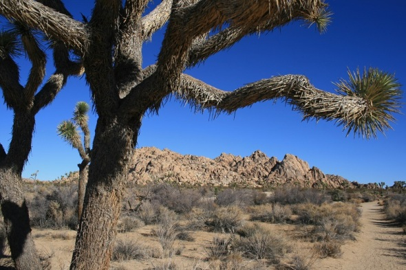 Willow Hole Trail, Joshua Tree National Park
