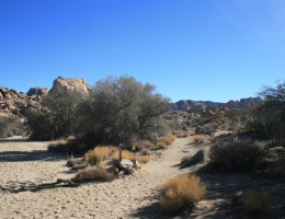 Leaving the wash on the Willow Hole Trail, Joshua Tree National Park
