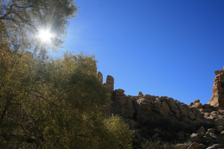 Sunlight at Willow Hole, Joshua Tree National Park