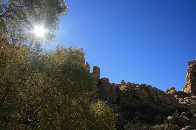 Sunlight at Willow Hole, Joshua Tree National Park