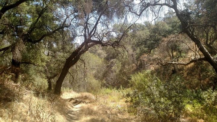El Prieto Canyon, San Gabriel Mountains
