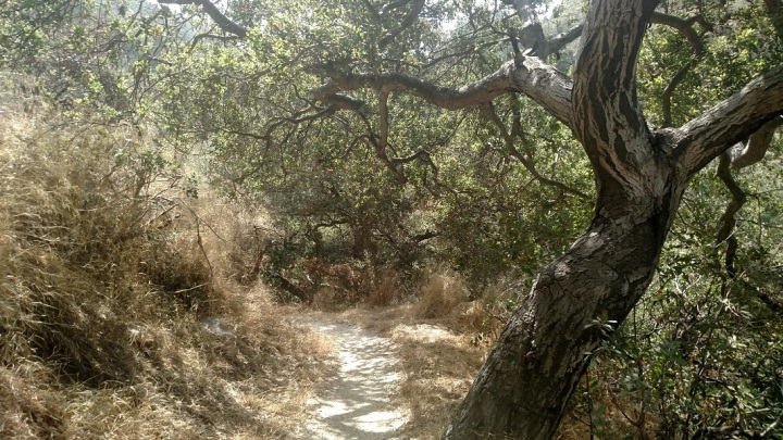 Sunset Ridge Trail, Angeles National Forest