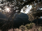 Sunlight through oak branches, East Walker Ranch, Santa Clarita, CA