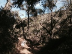 Oak woodland, Slaughterhouse Canyon Trail, Murrieta, CA